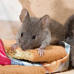 уничтожение мышей
